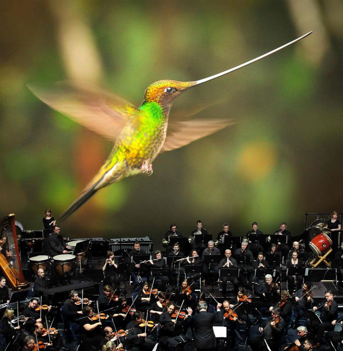 Sword-billed humming bird. Image: Supplied